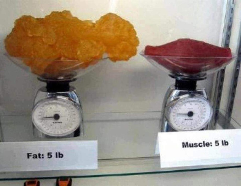 muscle v fat